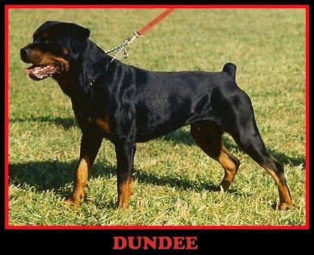 dundee-1.jpg