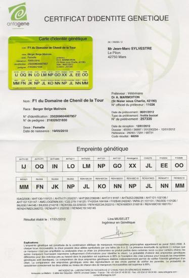 identite-genetique-f1.jpg